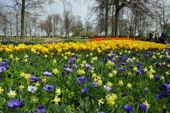 Blumenfeld in Keukenhof-Gärten Lizenzfreie Stockfotos