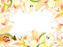 Blumenfeld mit Lilienblumen und grünem Blatt Stockfoto