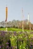 Blumenfeld in Nord-Thailand Lizenzfreies Stockfoto