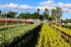 Blumenfeld, Sadec, Dong Thap Province, Vietnam, im Frühjahr lizenzfreie stockfotos