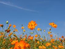 Blumenfeld, schöne Landschaft Lizenzfreie Stockbilder