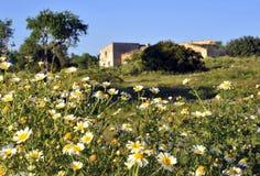 Blumenfeld und -Altbau Stockbild
