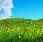 Blumenfeld und blauer Himmel Lizenzfreie Stockbilder