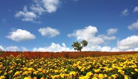 Blumenfeld und blauer Himmel Lizenzfreie Stockfotografie