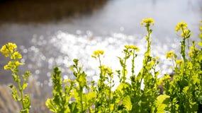 Blumenfeld und Funkeln Lizenzfreie Stockfotos
