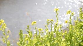 Blumenfeld und Funkeln stock footage