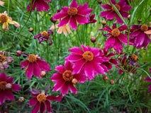 Blumenfelder stockfoto