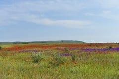 Blumenfelder stockbilder