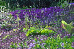 Blumenfelder Lizenzfreie Stockfotos