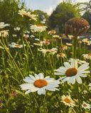 Blumenfelder Lizenzfreies Stockbild