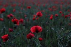 Blumenfelder für überhaupt stockfoto