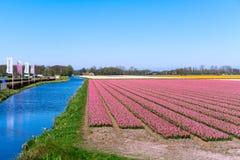Blumenfelder von mehrfarbigen Hyazinthen entlang dem Kanal im n?rdlichen Teil von Holland, in lizenzfreie stockfotos