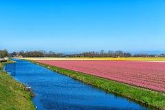 Blumenfelder von mehrfarbigen Hyazinthen entlang dem Kanal im n?rdlichen Teil von Holland, in lizenzfreie stockbilder