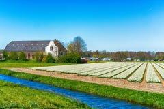 Blumenfelder von mehrfarbigen Hyazinthen entlang dem Kanal im n?rdlichen Teil von Holland, in lizenzfreies stockfoto