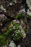 Blumenfelsen stockfotos