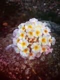 Blumenfelsen Lizenzfreie Stockfotografie
