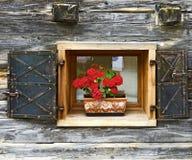 Blumenfenster mit metallischen Fensterläden Lizenzfreie Stockfotografie