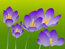 Blumenflieder Stockfoto