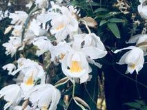Blumenfliegen Lizenzfreies Stockbild
