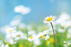 Blumenfrühling Stockfotografie