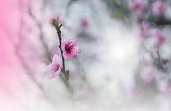 Blumenfrühlingsgrenzehintergrund mit rosa blos einladung Papierkarten dekoratives Muster Grenz- oder Rahmen- und Kopienraum Besch Stockfoto