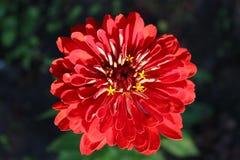 Blumenfreude der Gärtner Lizenzfreie Stockfotos