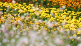 Blumengarten Lizenzfreies Stockfoto