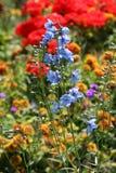 Blumengarten Stockbild