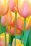 Blumengarten stockfotografie