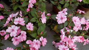 Blumengarten-cc$mã ¡ Laga-Andalusien-Spanieneuropa Stockfotografie