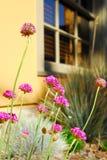 Blumengarten am Haus Stockfoto