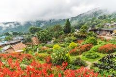 Blumengarten in Hmong-Dorf an Nord von Thailand Stockfoto
