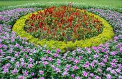 Blumengarten im Norden von Thailand Lizenzfreie Stockfotografie