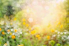 Blumengarten oder Park, unscharfer Naturhintergrund Stockfoto