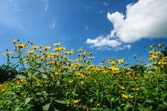 Blumengarten und bewölktes stockfotografie