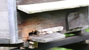 Blumengarten und Bienenstöcke stock video