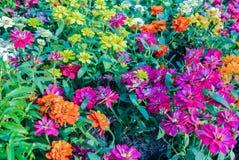 Blumengarten verziert für die Schönheit des Platzes in Bangkok Thailand Stockfotografie