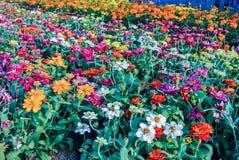 Blumengarten verziert für die Schönheit des Platzes in Bangkok Thailand Stockfotos
