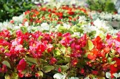 Blumengartenhintergrund Lizenzfreie Stockfotografie