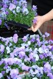 Blumengartenmitte Stockbild
