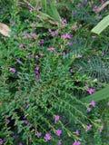 Blumengartentrimmer Stockbild