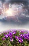 Blumengebirgsfrühling Stockfotografie