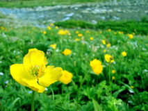 Blumengelb Stockfoto