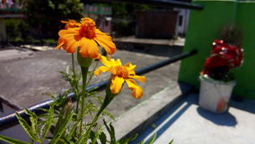 Blumengelb Stockfotografie
