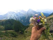 Blumengeschenk vor Alpen lizenzfreies stockfoto