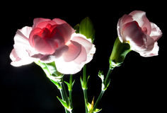 Blumengesteck Lizenzfreie Stockbilder