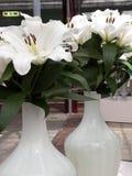 Blumengesteck in Keukenhof-Park, Amsterdam Lizenzfreie Stockbilder