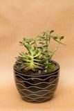 Blumengesteck mit Succulents und Steinen Lizenzfreie Stockbilder