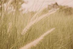 Blumenglasblasen in der Windbewegungsunschärfe Stockfoto