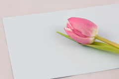 Blumengrüße Lizenzfreie Stockfotos